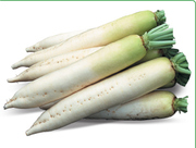 Cемена Китано. Предлагаем купить семена редиса дайкон ТИТАН