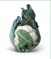 Семена цветной капусты МИСОРА F1 фирмы Китано